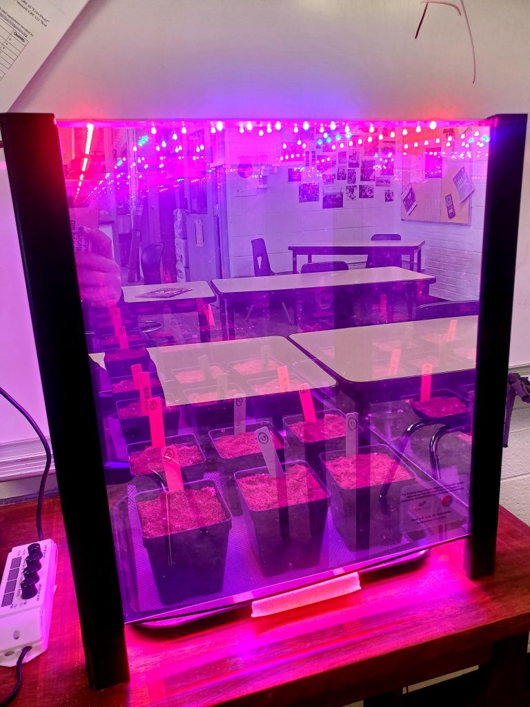 Plants in a grow lab