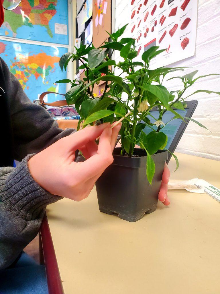 handling plants