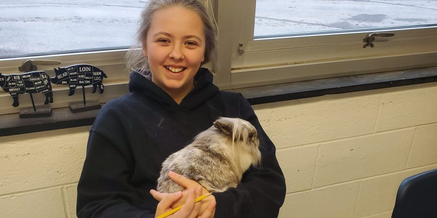 A student holds a rabbit